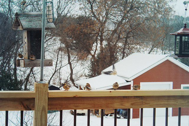 birds, bird feeder, winter, wildlife