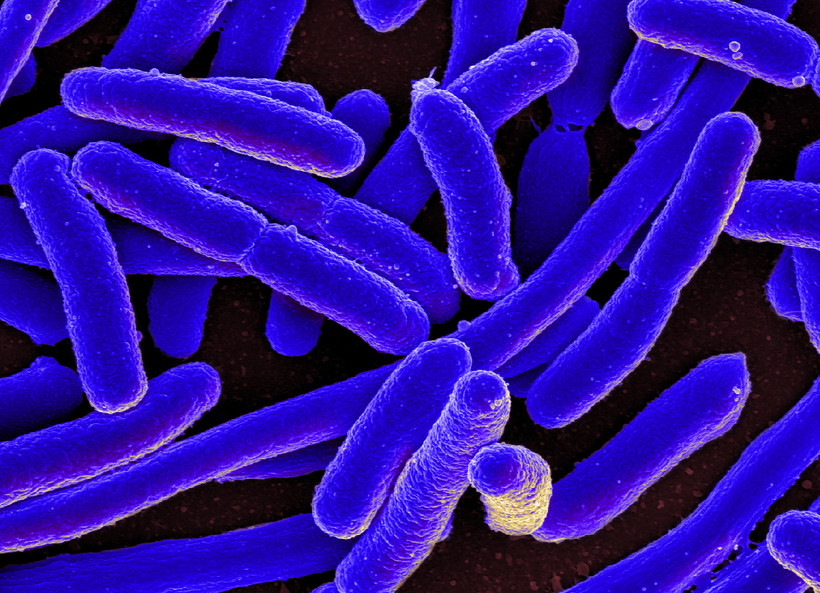 Bacteria, microbes, microscopic