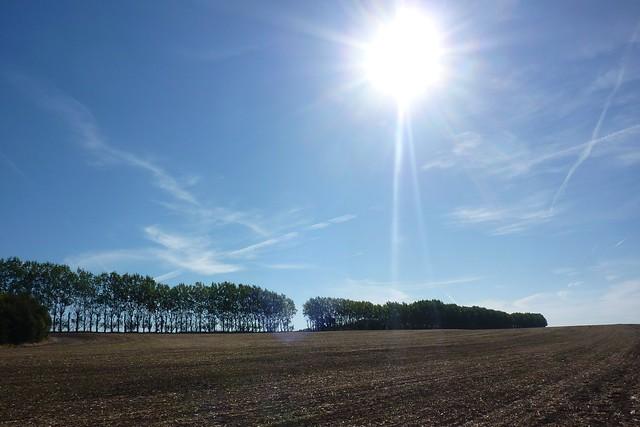 Sun shines over a field