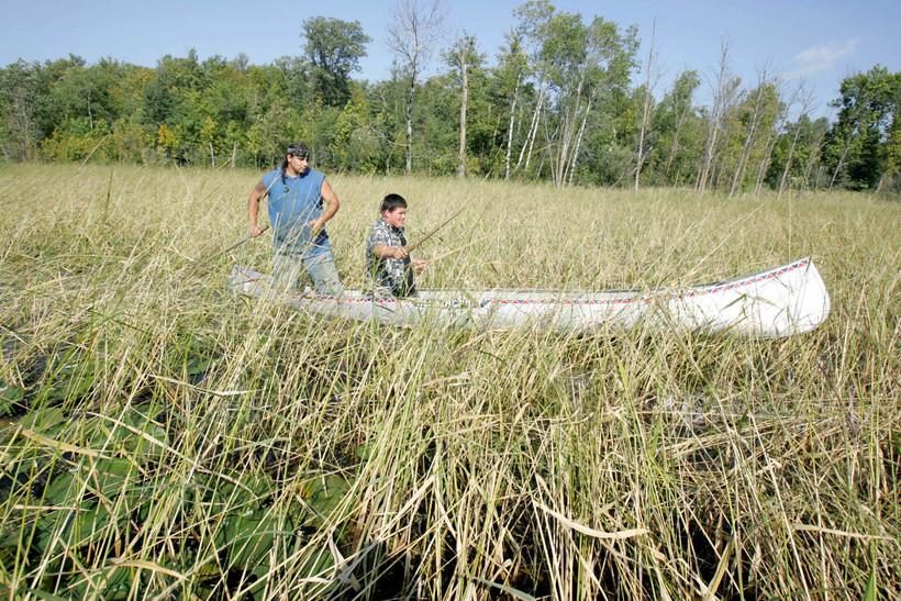 Men cultivating wild rice