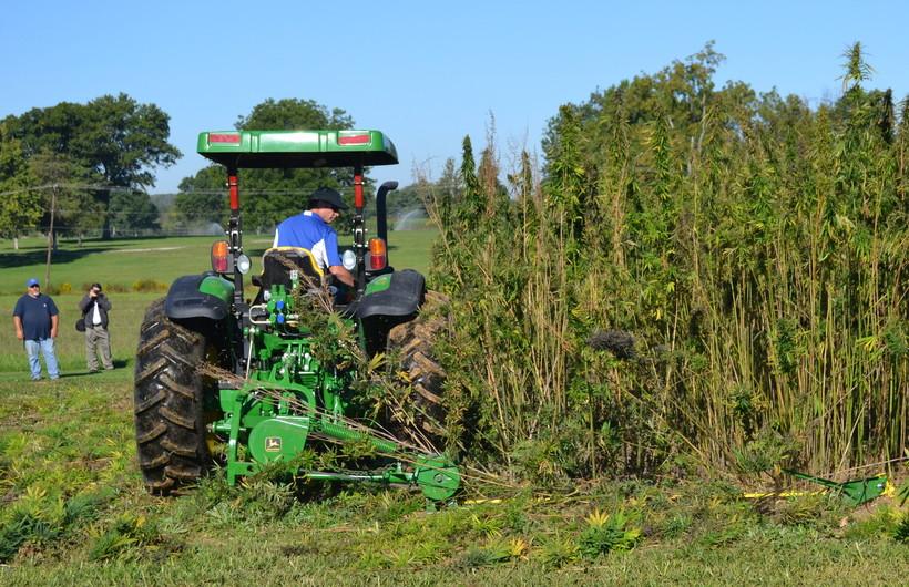a tractor cuts a small plot of hemp