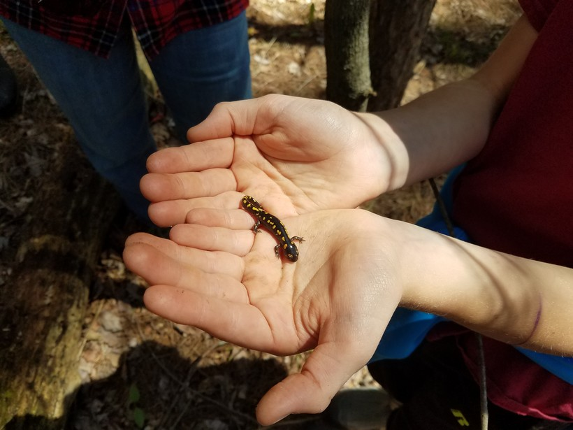 a salamander in a person's palm