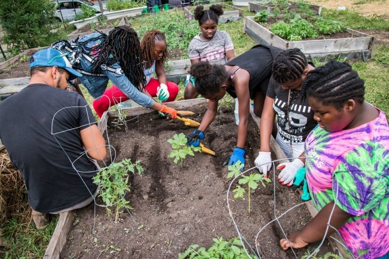 Young people huddle around a garden plot planting vegetables.