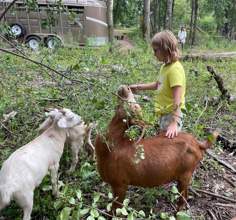 Madison Bergeson, 10, pets Mocha the goat at Wausau's Goatapalooza event