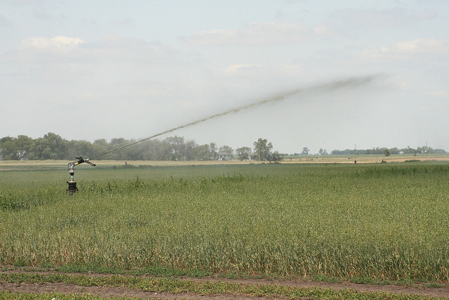 manure irrigation