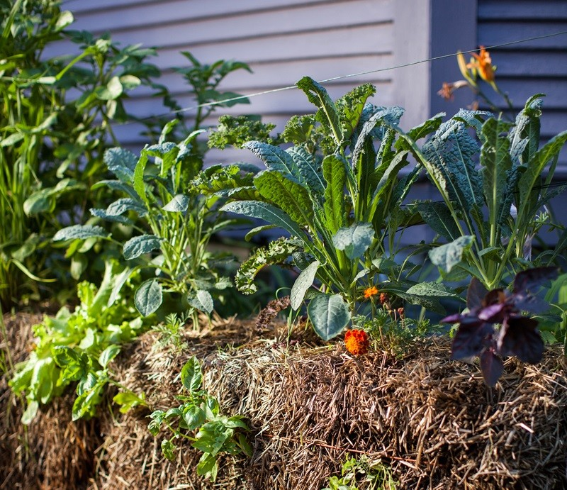 How To Keep Rodents Out Of Straw Bale Gardens | Wisconsin Public Radio