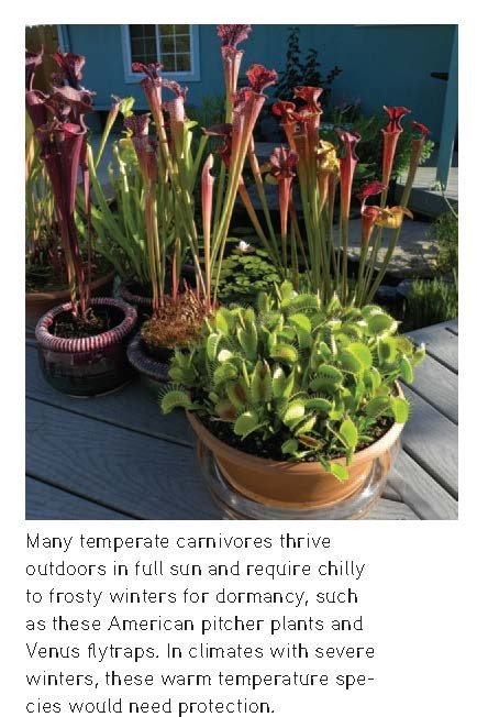"""Potted American pitcher plants and Venus flytraps, from """"The Savage Garden,"""" Peter D'Amato, Photo credit: Damon Collingsworth"""