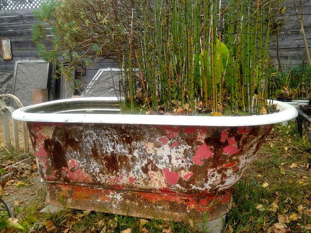 salvaged tub, Lynn Friedman