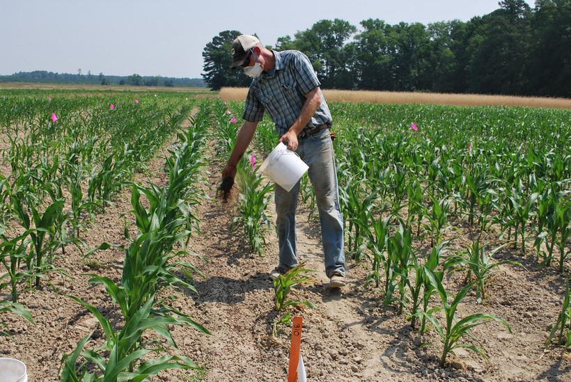 USDA organic researcher