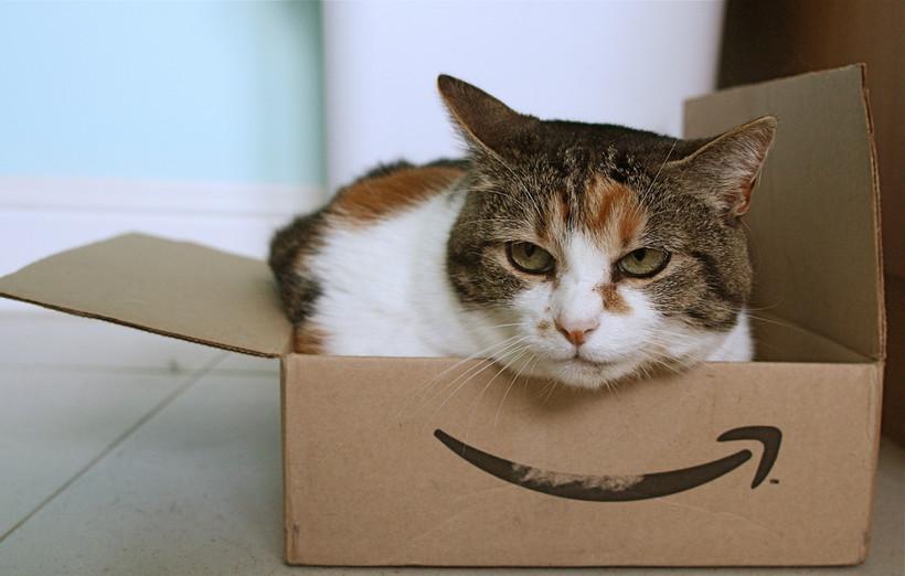 Cat in Amazon box