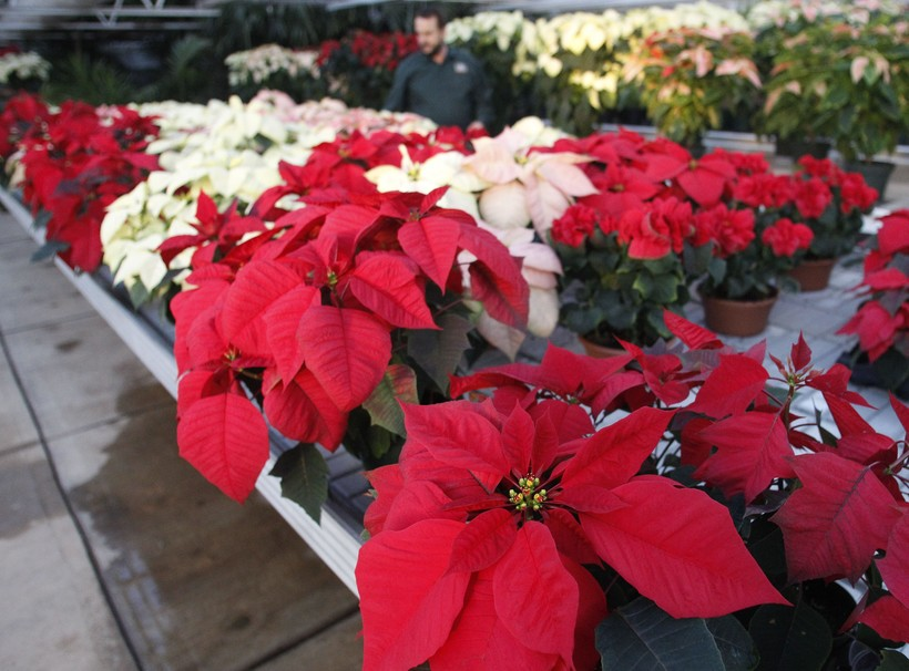 Wide Variety Of Plants Available During The Holidays Wisconsin