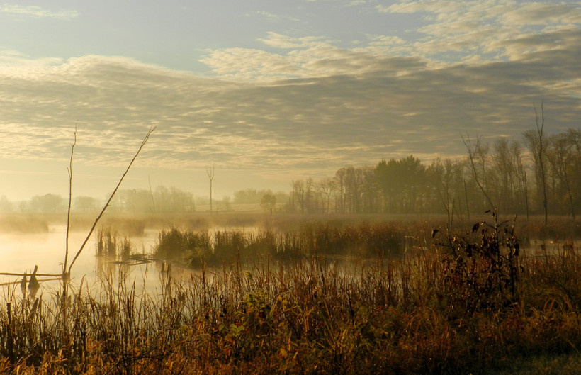 Morning in the Grand River Marsh