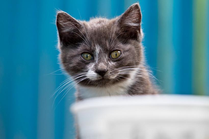 Kitten looking at food bowl
