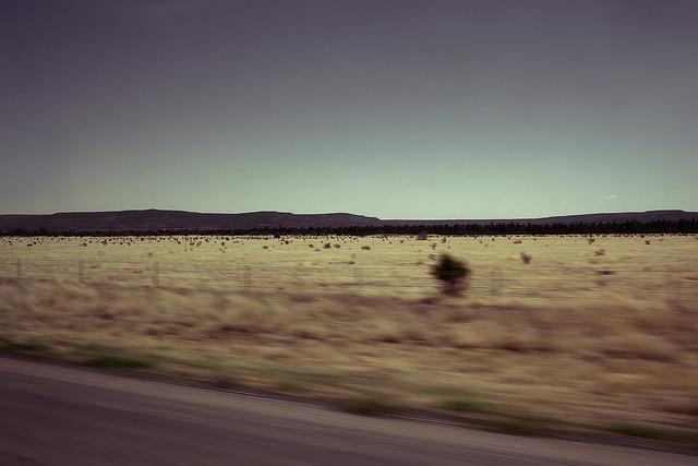 New Mexico desert