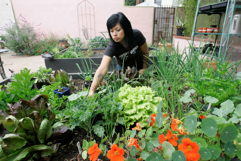 Adriana Martinez works in her backyard garden