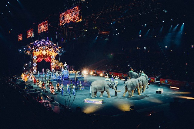 circus, ringmaster, Ringling Bros. Barnum & Bailey, entertainment, children, elephants, animals