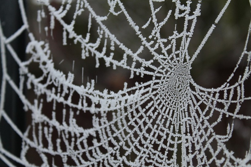 What Happens To Spiders In The Winter Wisconsin Public Radio