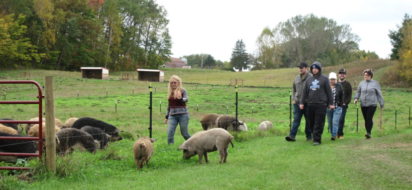 Sherry Sutton Zanardo of Chickadee Hills, her pigs and staff from The Informalist in Eau Claire