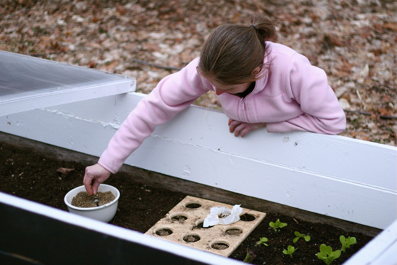 planting in cold frame