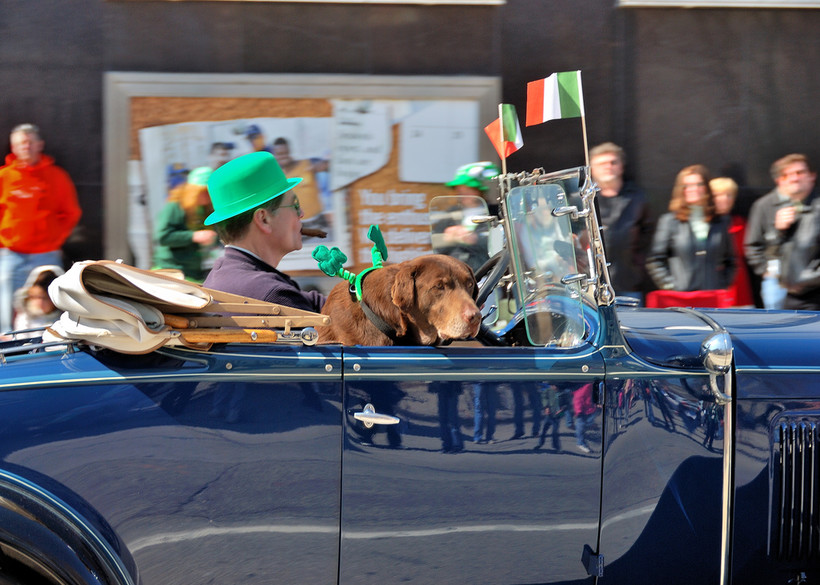 Milwaukee St Patrick's Patricks Day Parade Dog Irish Flag Car Cigar Green Hat