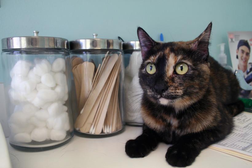 Cat at vet office