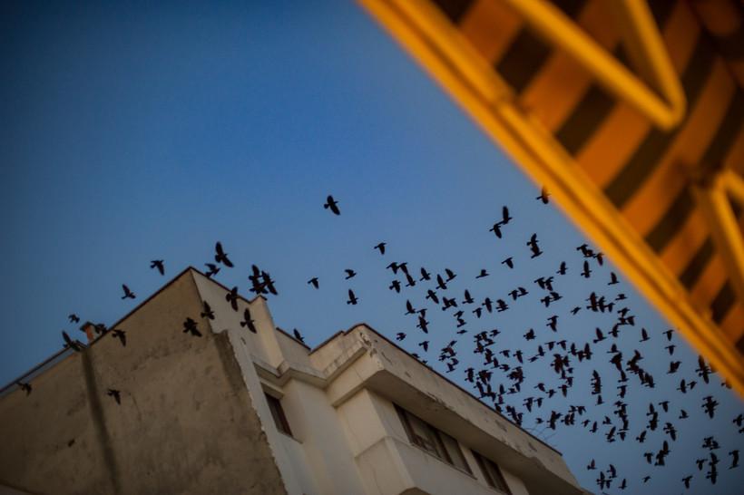 birds over city