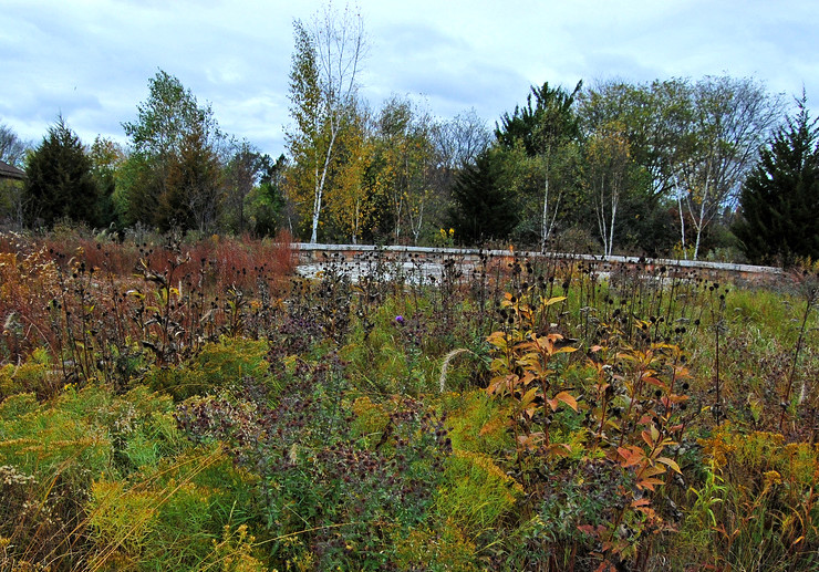 Wisconsin Native Plant Garden