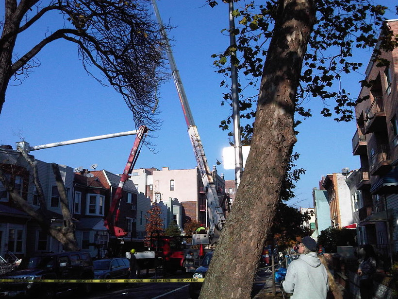 crew taking down tree on city street