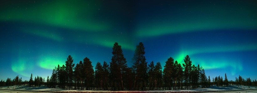 The Northern Lights over a forest of pine trees
