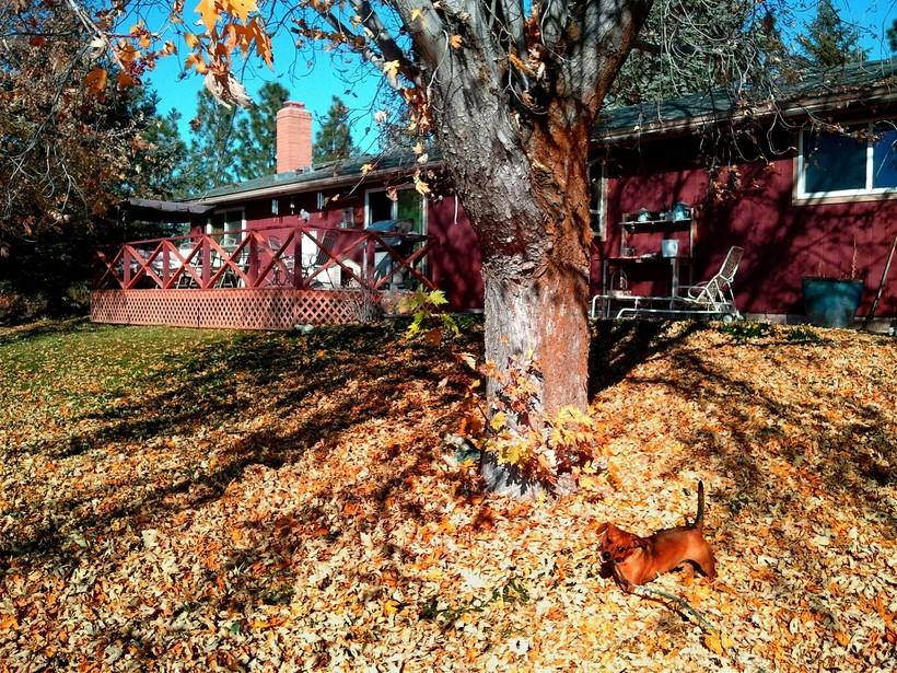 Yard in fall