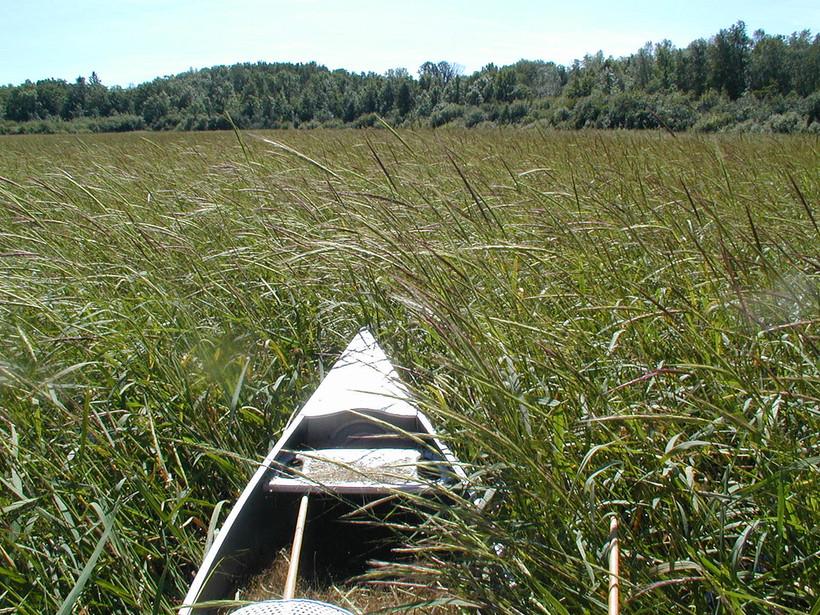 Canoe Among Wild Rice