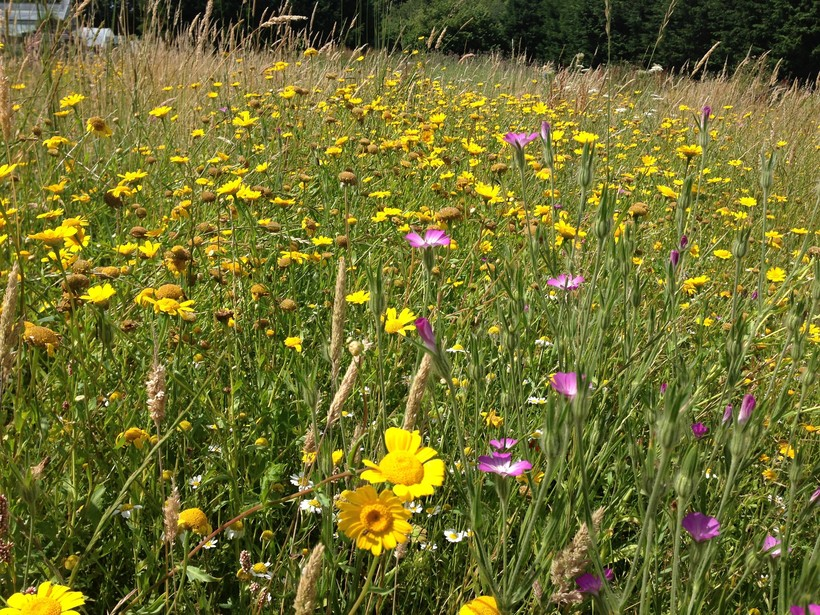 A burst of wildflowers in a summer meadow