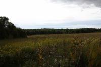 rolling prairie near Ladysmith