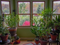 houseplants, indoor garden