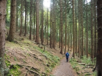 person walking on trail in woods