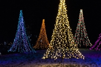 Holiday Trees at the Green Bay Botanical Garden and WPS Garden of Lights display