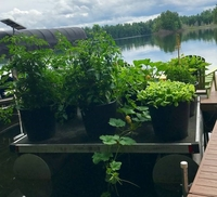 Raft container garden in northern Wisconsin