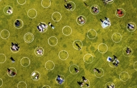 Circles mark social distance in park