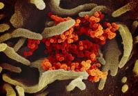 COVID-10, coronavirus cell