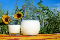 A jug of milk sits next to a glass of milk in front of sunflowers