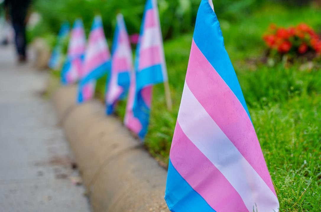 Transgender pride flags line the sidewalk