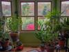 houseplants, indoor garden